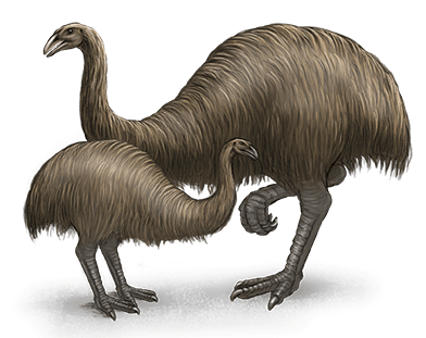 giant-moa-ned-barraud-illustrator-from-moa-to-dinosaurs