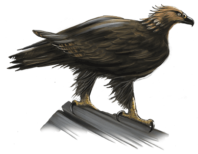 haast-eagle-ned-barraud-illustrator-from-moa-to-dinosaurs