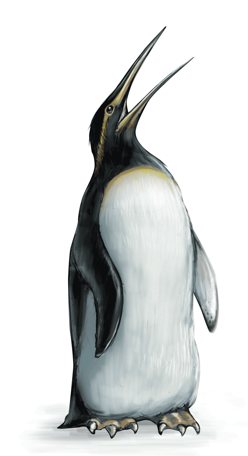 kairuku-penguin-ned-barraud-illustrator-from-moa-to-dinosaurs