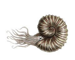 ammonite-ned-barraud-illustrator-from-moa-to-dinosaurs