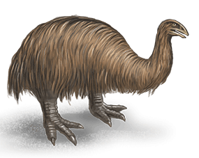 moa-heavy-footed-ned-barraud-illustrator-from-moa-to-dinosaurs