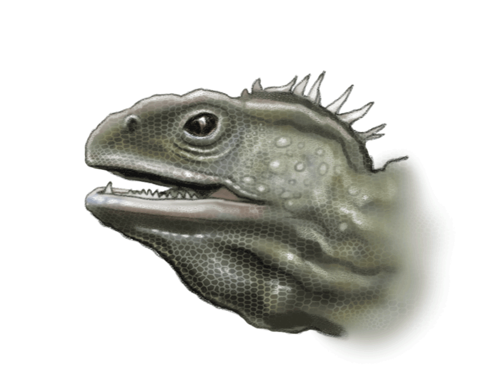 tuatara-ned-barraud-illustrator-from-moa-to-dinosaurs