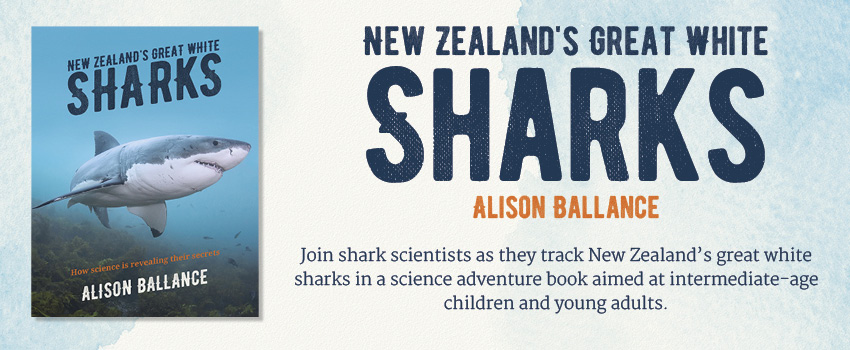 NZs-Great-White-Sharks