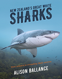 NZ Great White Sharks_260pxH