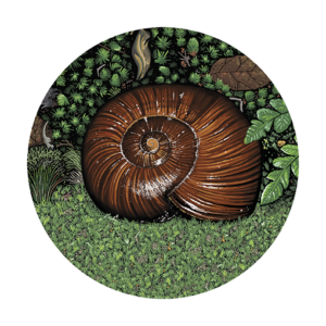 Giant snails home WHIT