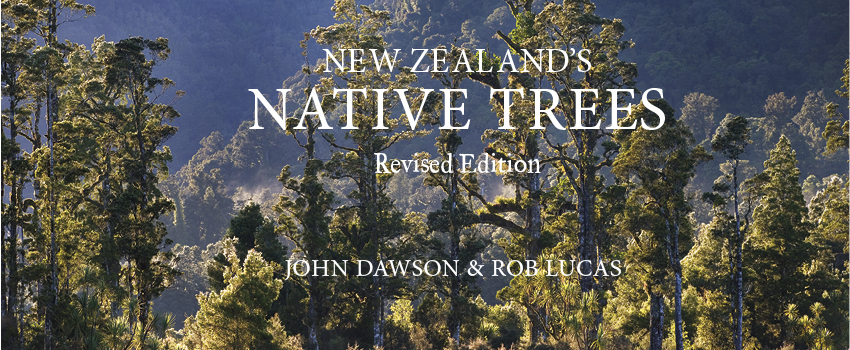 New-Zealands-Native-Trees