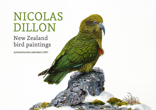 2021 Nicolas Dillon New Zealand Bird Paintings