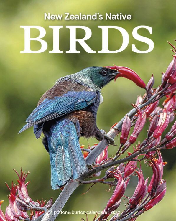 2022 New Zealand's Native Birds Calendar